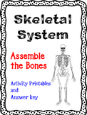 Assemble the Skeleton Activity