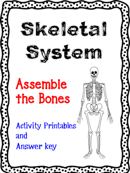 Assemble the Skeleton Activity