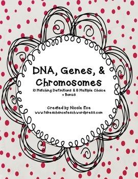 Assessment: DNA, Genes, & Chromosomes Quiz
