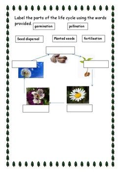 Assessment for the plants science topic
