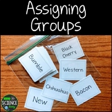 Assigning Groups Freebie