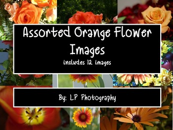 Assorted Orange Flower Images  Personal & Commercial Use