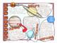 Astronomy Doodle Notes - Entire Unit Bundle, Science Doodle Notes