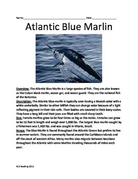 Atlantic Blue Marlin - Informational Review Article Questions facts vocabulary