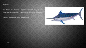 Atlantic Blue Marlin - Power Point - Facts Information Pictures