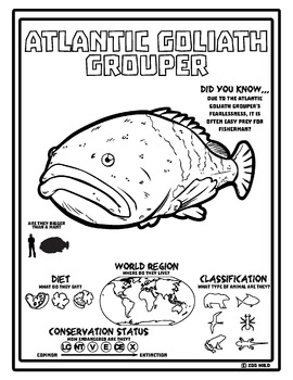 Atlantic Goliath Grouper -- 10 Resources -- Coloring Pages, Reading & Activities