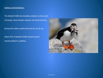 Atlantic Puffin - Power Point - Information Pictures