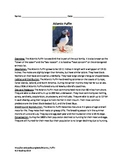 Atlantic Puffin - Review Article Questions Vocabulary Word Search