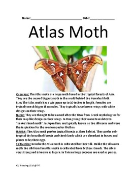 Atlas Moth - worlds second biggest moth review lesson facts questions