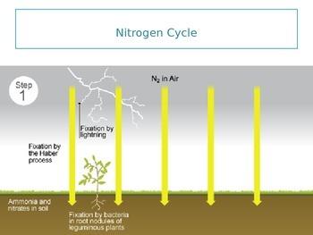 Atmosphere - Nitrogen Cycle