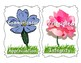 Attitudes and Attributes flowers half page