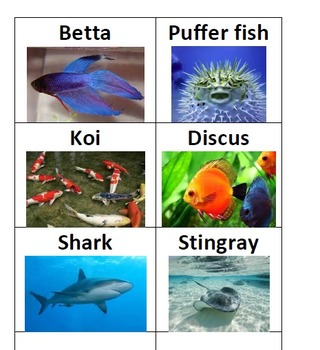 Attribute Category Game - Birds and Fish