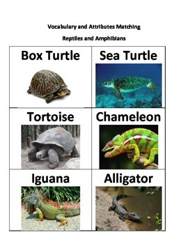 Attribute Category Game - Reptiles and Amphibians