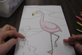 Audubon Flamingo Color