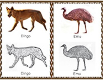 Australia: Animal of Australia Tracing cards