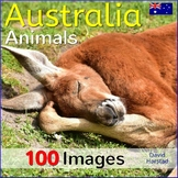 Australian Animals and Their Habitats