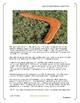 Australia Boomerang History Art Lesson Montessori Grade Pre-K to 5th Common Core