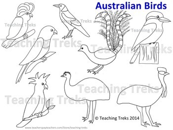 Australia Clipart Birds
