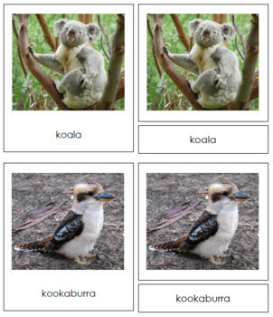 Australia / Oceania Animals: 3-Part Cards