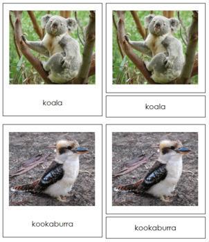 Australia / Oceania Animals: 3-Part Cards