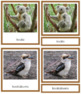 Australia / Oceania Animals: 3-Part Cards (color borders)