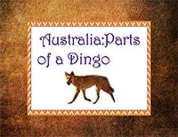 Australia: Parts of a Dingo
