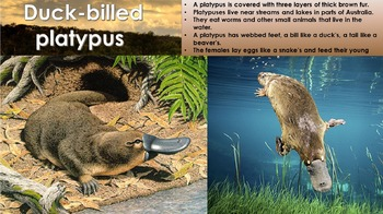 Australia wildlife presentation