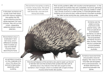 Australian Animal Adaptation Printables - Camel, Echidna and Platypus