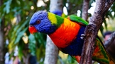 Australian Animal Photo Set