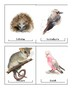 Australian Animal Watercolor Flashcards