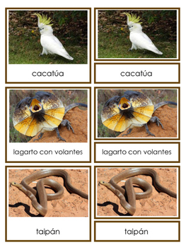 Australian Animals 3-part Cards in English and Spanish - Animales de Australia