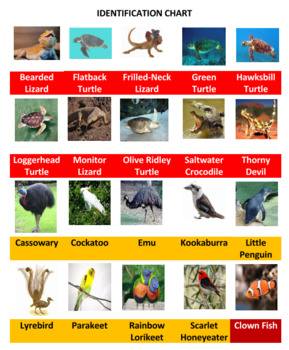 Australian Animals Battle