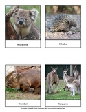 Australian Animals Cards
