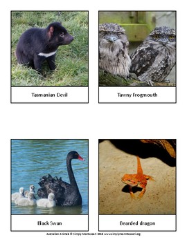 Australian Animals Cards