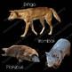 Australian Animals Clip Art Real Clips Photo & Artistic Digital Stickers
