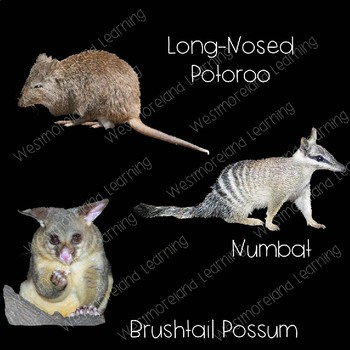 Australian Animals Clip Art Real Clips Photo & Artistic Digital Stickers
