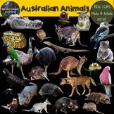 Australian Animals Clip Art Real Clips Photo & Artistic Di
