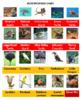 Australian Animals Crossswords