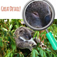 Australian Animals - Koala Photo / Photographic Clip Art for Commercial Use