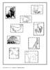 Australian Animals Mammals Sort - Marsupials Monotremes - Classifying - Test