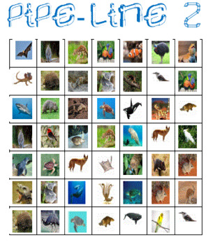 Australian Animals Pipe-Line Game