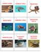 Australian Animals Sort Game