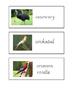 Australian Animals sight word cards