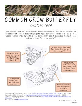 Australian Fauna Fact Sheet - Common Crow Butterfly