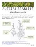 Australian Flora Fact Sheet - Austral Seablite