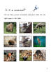 Australian Mammals booklet