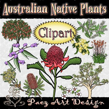 Australian Native Plants Clipart {Paez Art Design}