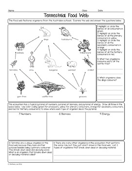 Australian Terrestrial Food Web Biology Homework Worksheet | TpT