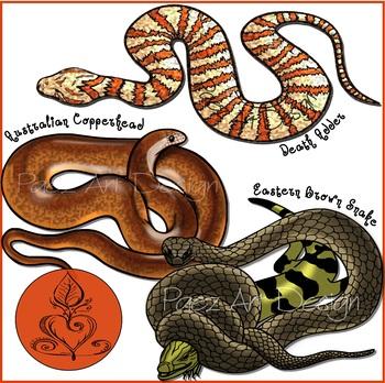 Australian Venomous Snakes