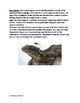 Australian Water Dragon - Informational article lesson facts questions